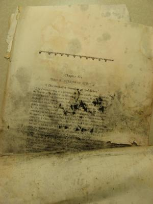 Before: When the pages arrived at the CHP, they were in need of conservation work due to mold, rust, and warping.  They appeared to have been damaged by water.
